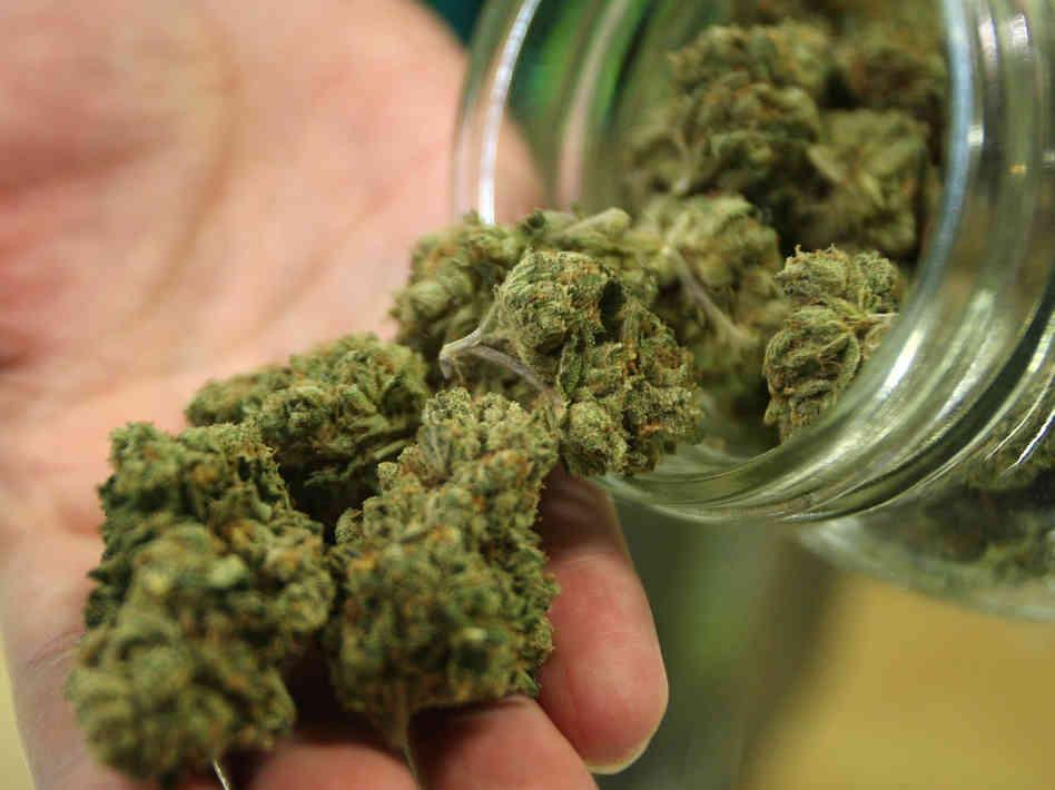 Incensurato fiorentino coltivava cannabis a casa