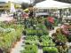 Mostra agrozootecnica alla Fiera di San Biagio, ecco le disposizioni dell'Ausl 12