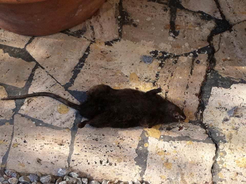 Casa invasa dai topi da anni: la colpa una discarica vicina a cielo aperto