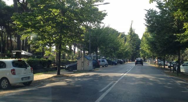 """Viale dei Tigli chiuso al traffico causa alberi pericolanti. Fruzza: """"La sicurezza prima di tutto"""""""