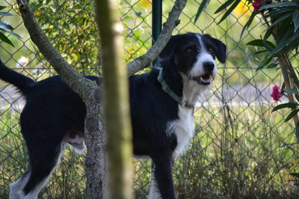Cane smarrito. Appello dei proprietari di Tito