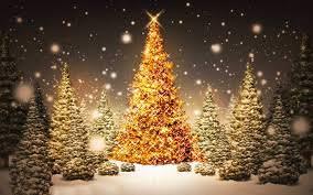 A Pietrasanta sarà Verde Natale. Parte l'allestimento di Piazza Duomo e piazzetta Crispi