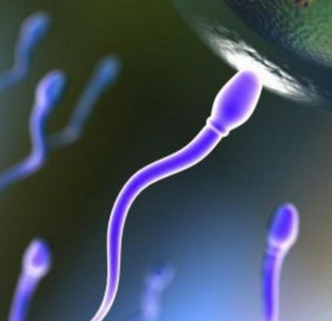 Спермограмма по Крюгеру норма отклонения расшифровка