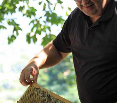 Contro l'influenza ci vengono in aiuto le api