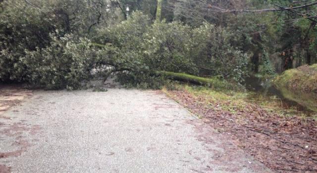 Bloccata dagli alberi caduti non può aprire il chiosco in Pineta