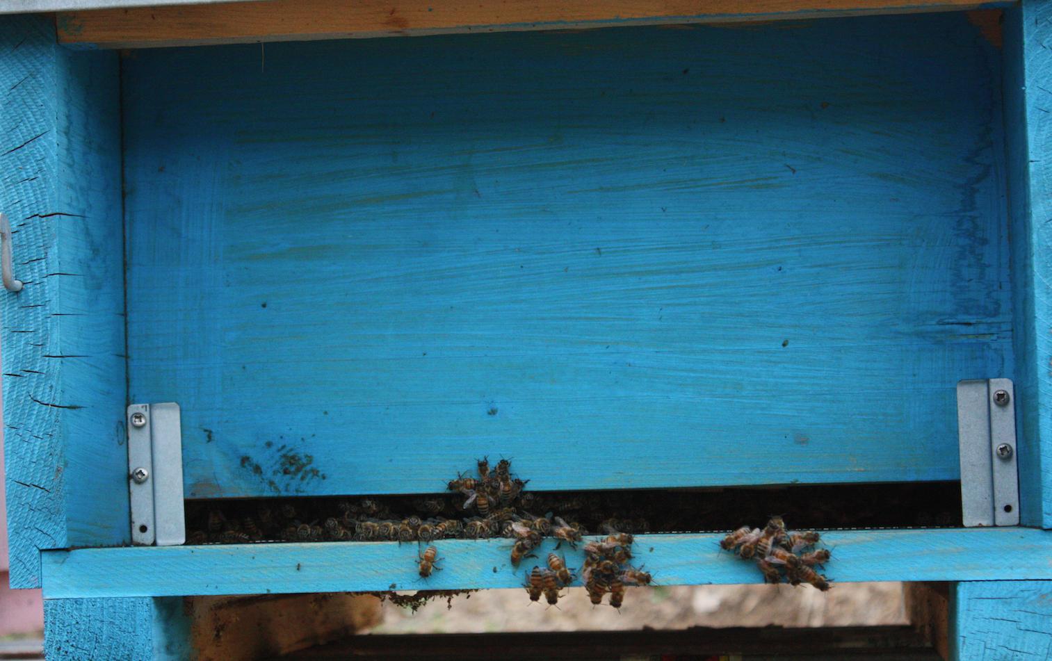Fondi regionali per gli apicoltori 'nomadi'
