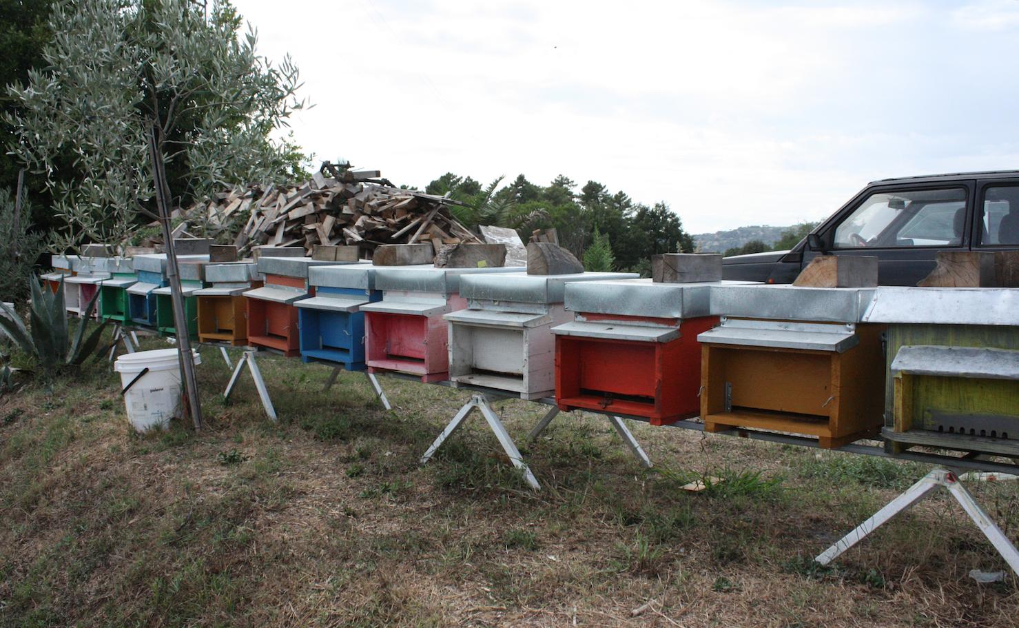 Un corso per tutti sull'apicoltura e il mondo delle api
