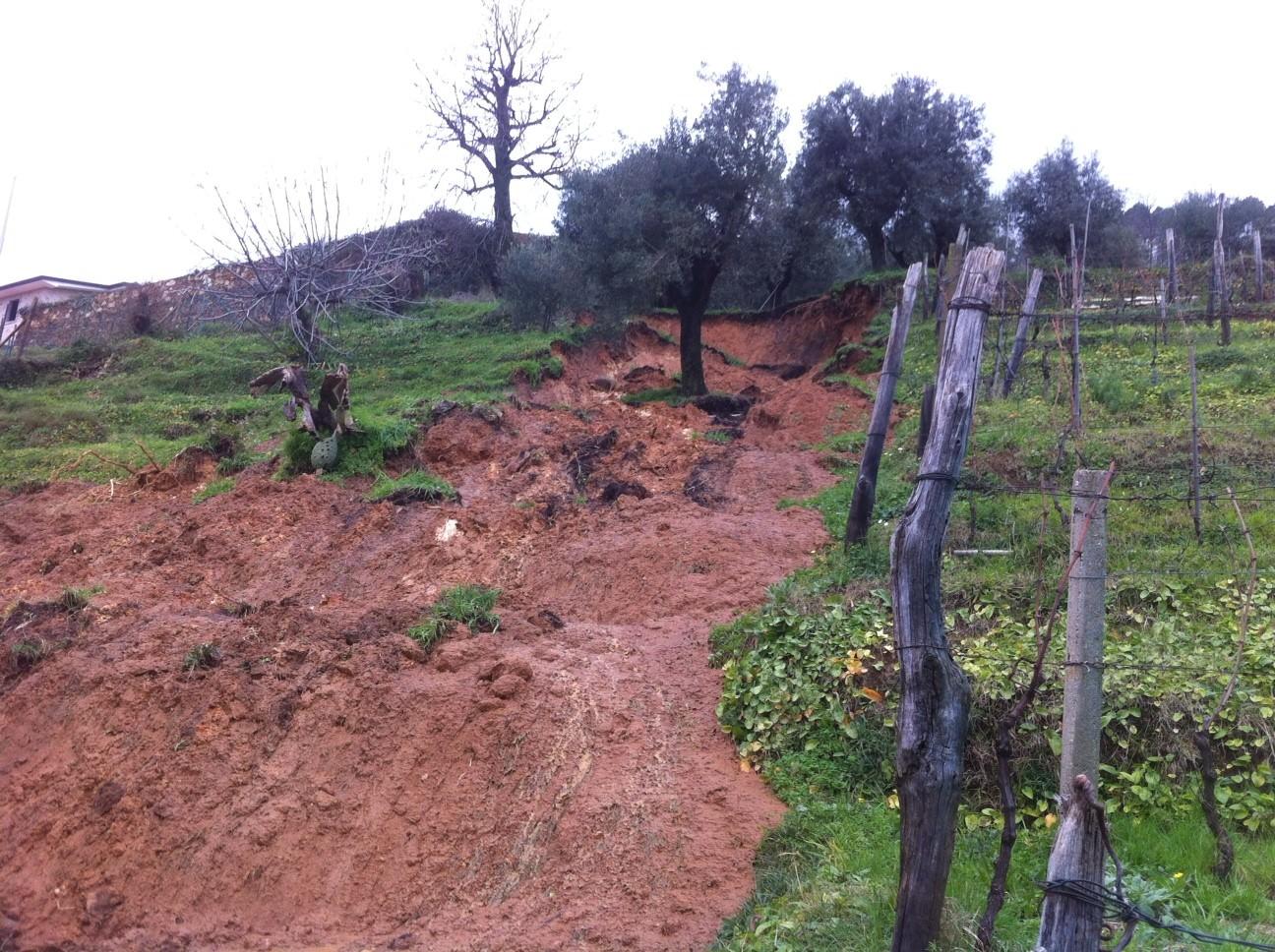 Maltempo, danni ingenti all'agricoltura per Pietrasanta