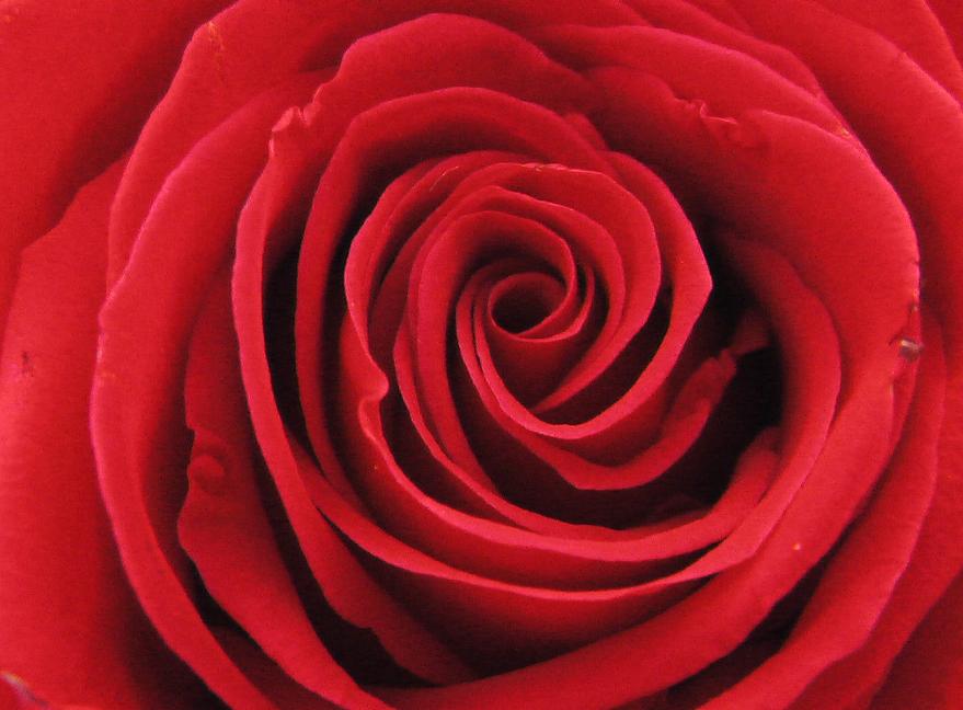 San Valentino: l'amore, la storia, il business, la crisi. Da Uomo a Uomo