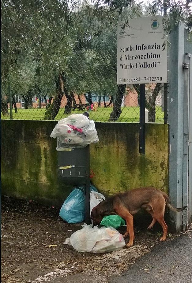 """Cani randagi nel cortile dell'asilo. Il sindaco: """"Tolleranza zero"""""""