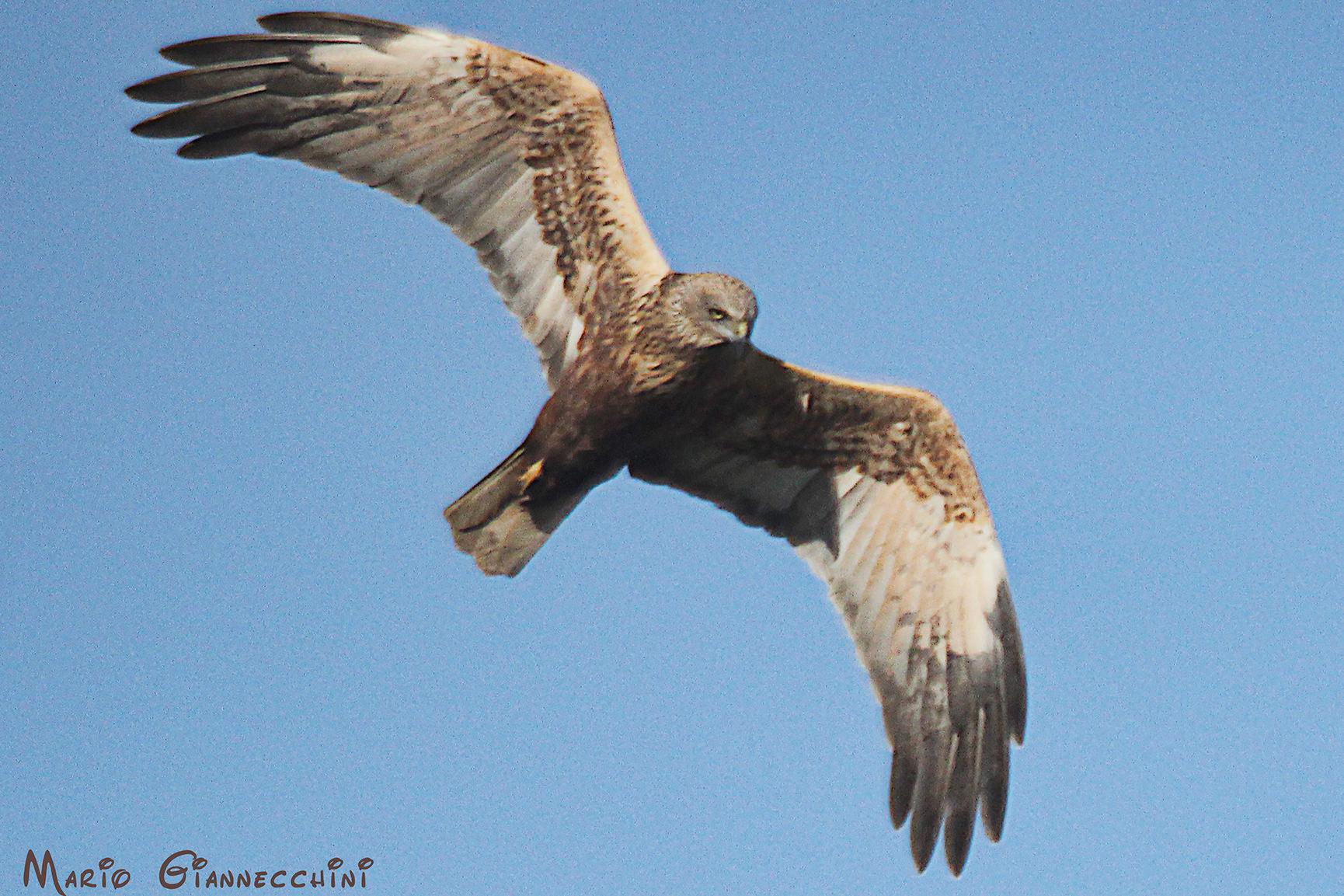 Week-end ornitologico sulle Alpi Apuane