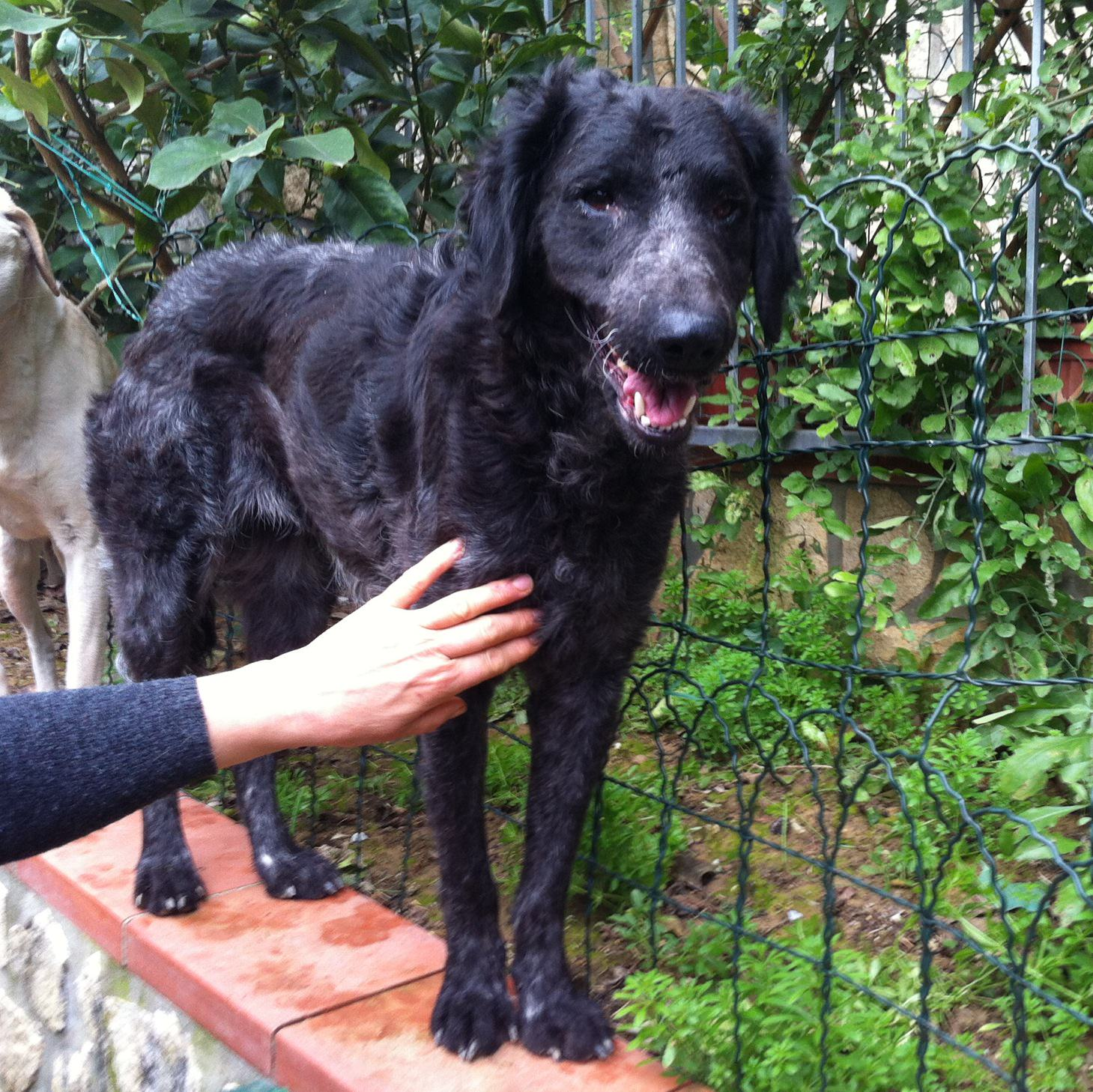 Sos Animali: Black cerca una nuova famiglia
