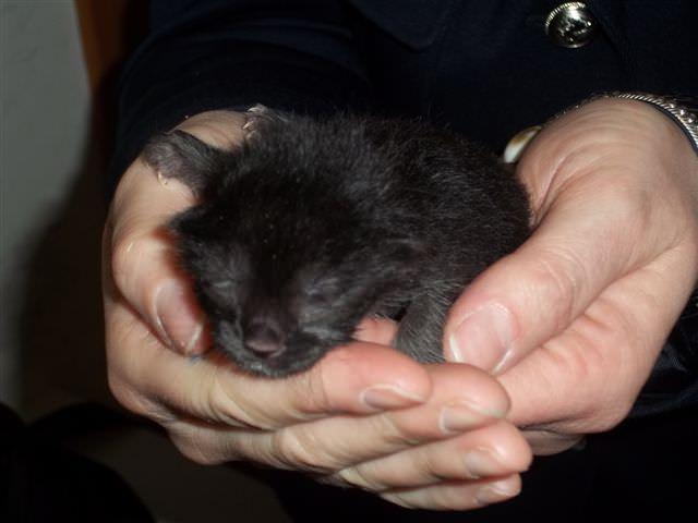 Quattro piccoli gattini abbandonati a Camaiore