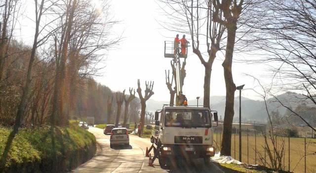 Posticipato l'avvio dei lavori per la potatura degli alberi in via Roma