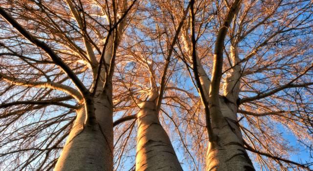"""""""Abbraccia un albero"""". In tanti per la difesa degli angoli verdi in città"""