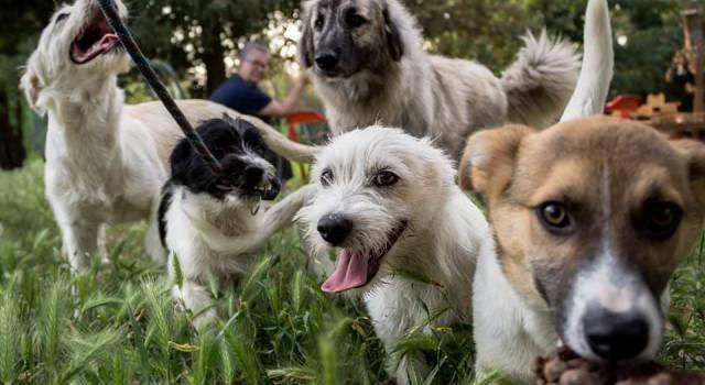 """""""Non vogliamo che i cani di Pietrasanta vengano trasferiti fuori dal territorio versiliese!"""""""