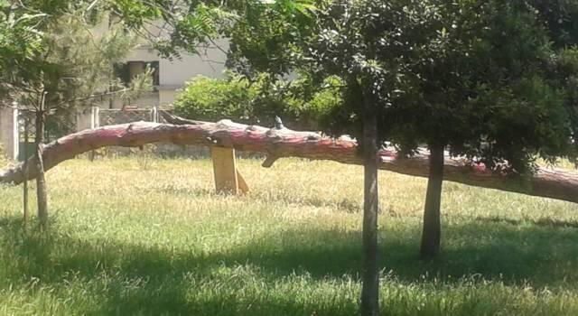 Al Parco di San Rossore un seminario sulle specie aliene in Toscana