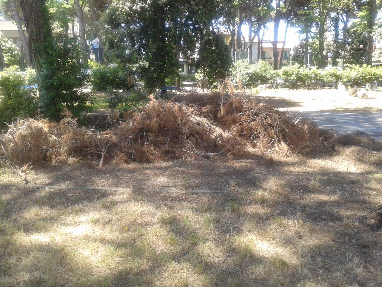 Alberi a terra e sporcizia nella Pineta di Levante