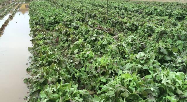 Agricoltura, ecco le novità per assicurare colture e serre contro il maltempo