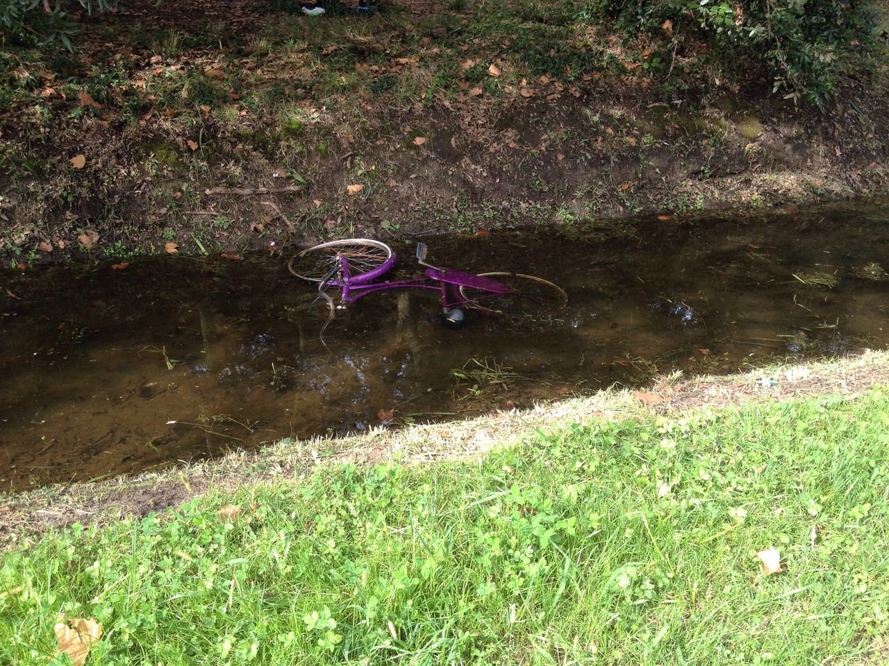 Fossi come discariche. Nelle acque della Pineta spuntano biciclette