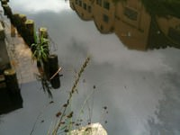 Viareggio, sversamento di gasolio nel canale Burlamacca