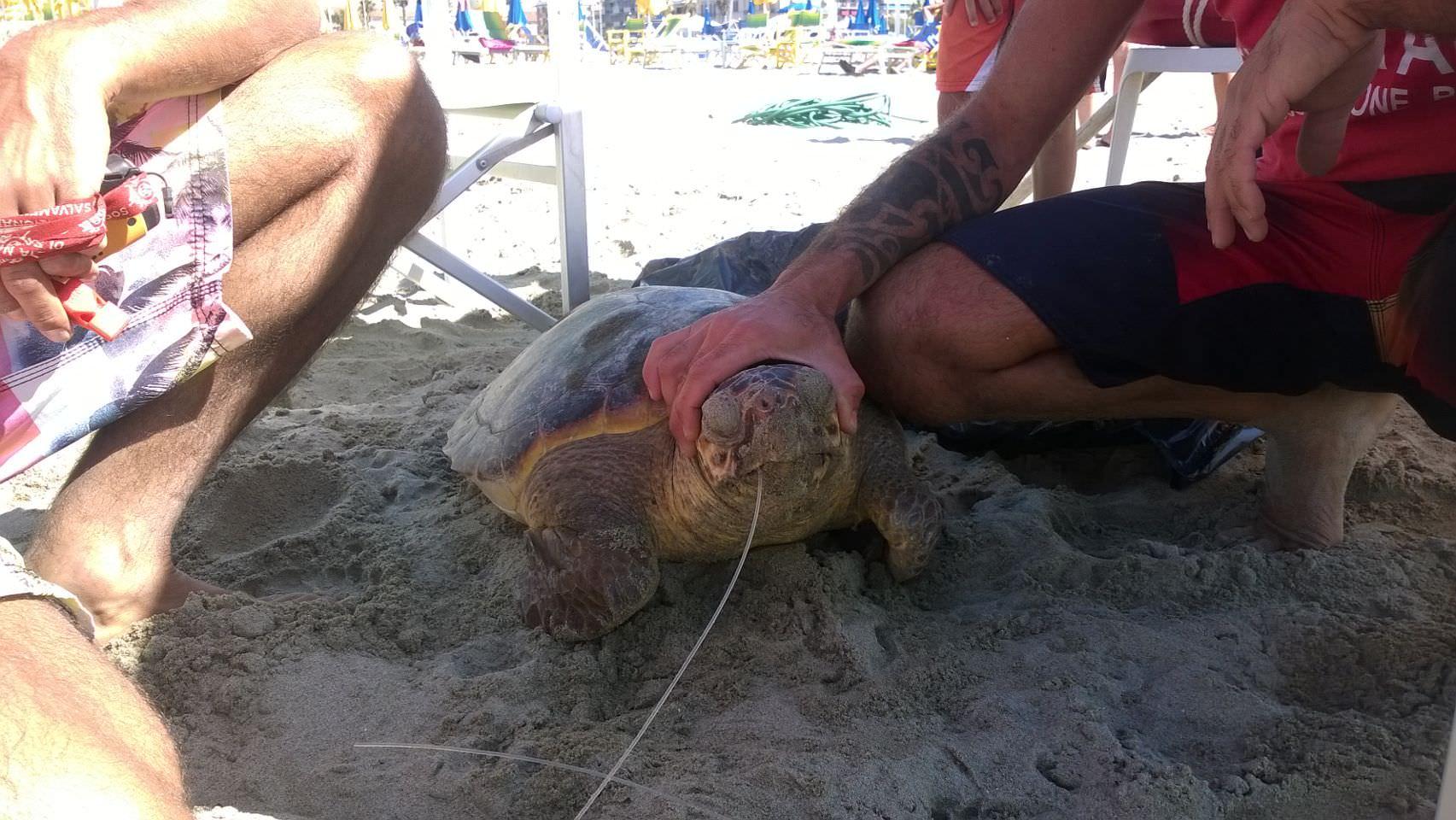 Trovata in mare una grossa tartaruga marina
