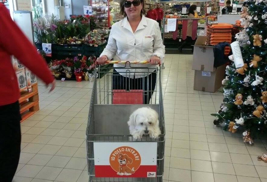"""""""Io qui posso entrare"""". Carrelli per cani alla Conad di Massarosa"""