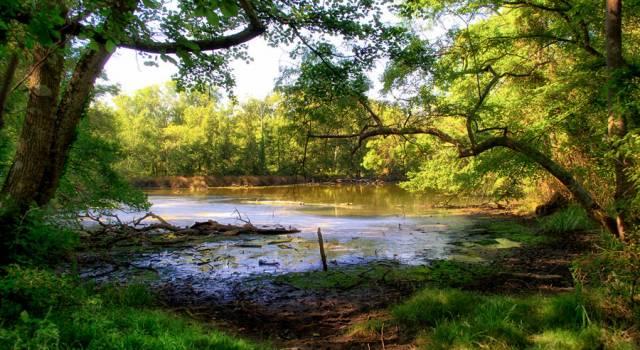 Giornata mondiale delle aree umide. Le iniziative del Parco