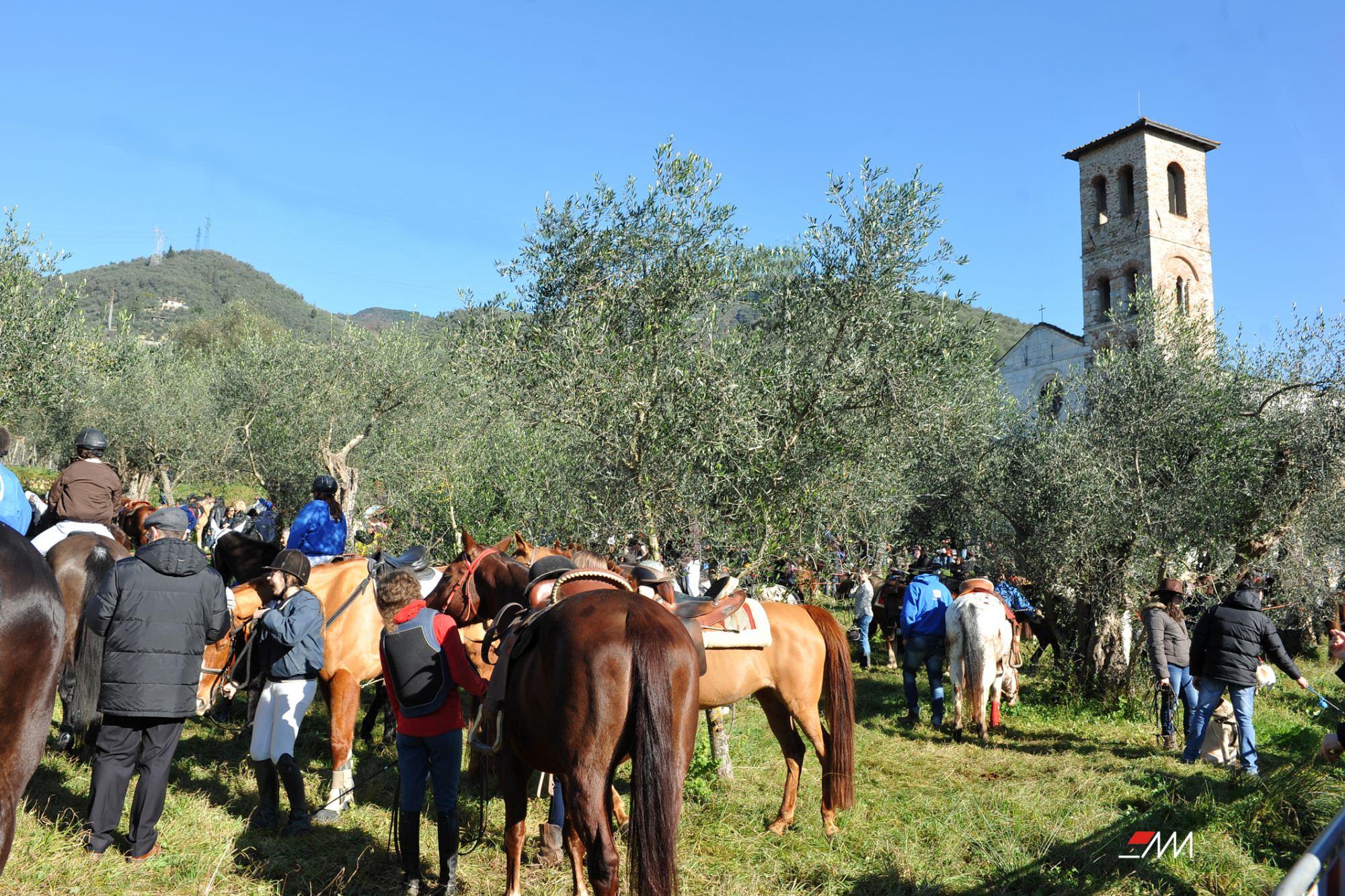 Benedizione degli animali a Pietrasanta