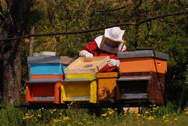 Riprende la produzione di miele