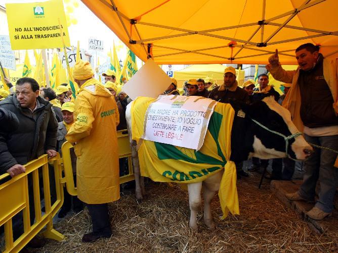 Allarme importazioni dall'estero. Maxi mungitura espressa in difesa del latte tricolore