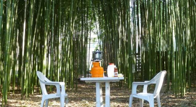 """Le mille proprietà del bambù in un'idea made in Versilia. Ecco """"Bambuseto"""""""