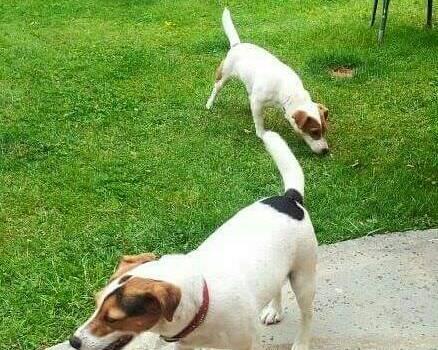 Riprende in tutta Italia il furto di cani