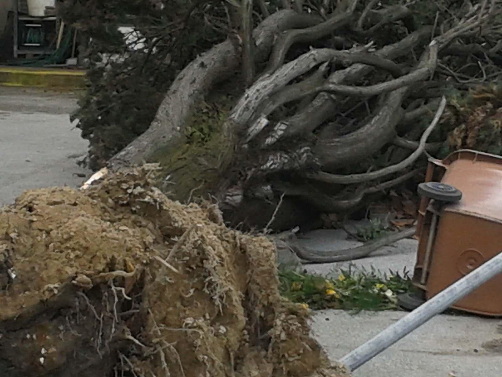 Fortunale del 5 marzo, 50mila euro ricavati dalla vendita dei tronchi