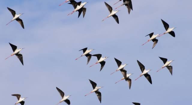 Birdwatching all'Oasi Lipu, ecco tutti gli appuntamenti di aprile