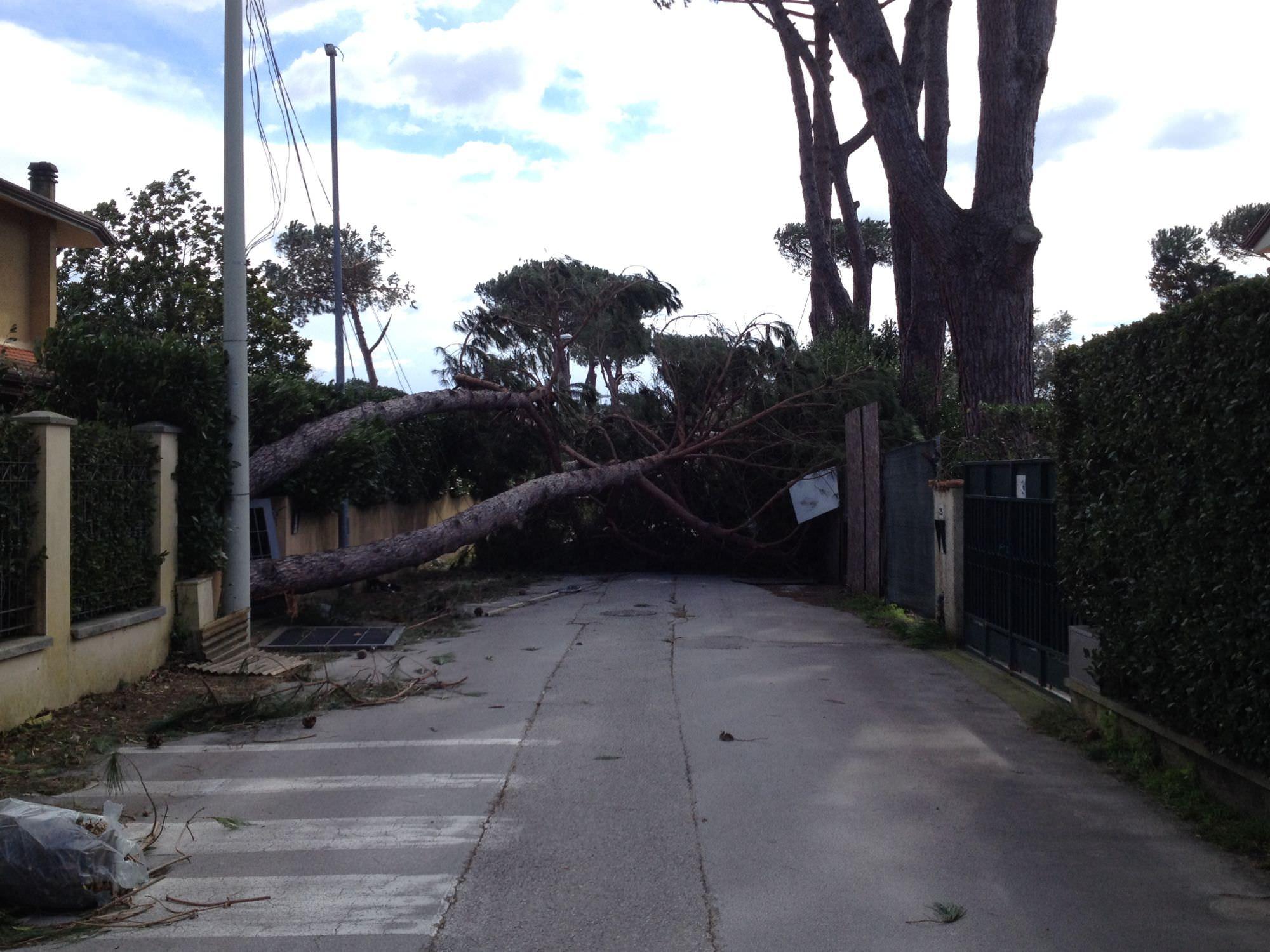 Tempesta di vento. Il presidente Baccelli scrive al governo per il riconoscimento della calamità nazionale