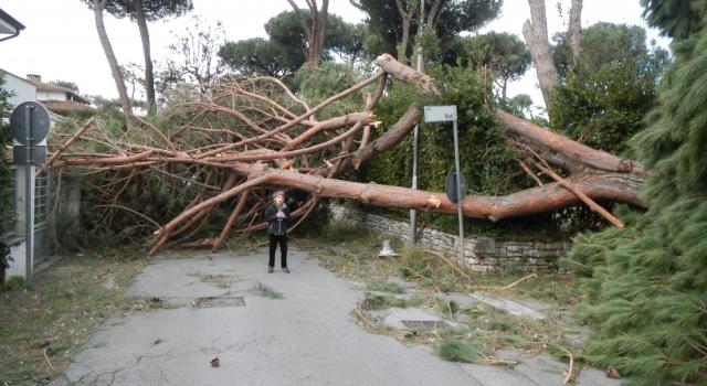 """Marcucci e Mariani: """"Facciamo una sottoscrizione per ripiantare i pini della Versilia"""""""