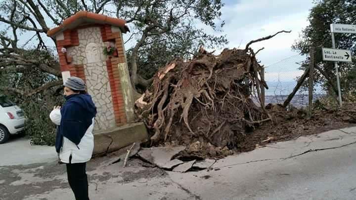 Il vento fa crollare la quercia secolare di Pedona