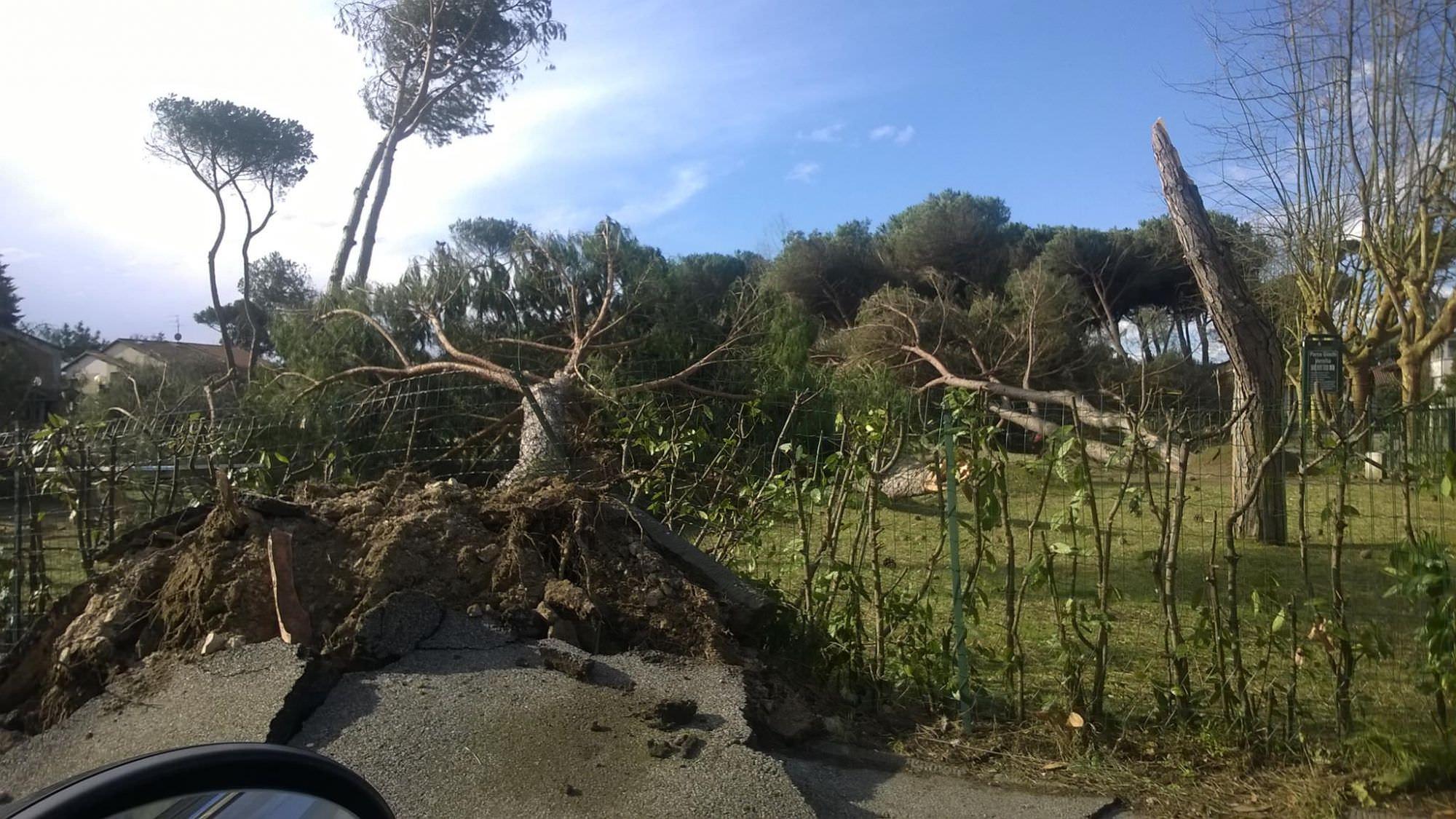 Rimozione di un albero. Chiusa la via Provinciale