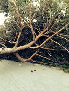 """""""Gli alberi caduti daranno un utile o saranno rimossi a costo zero"""""""