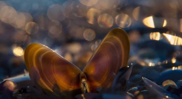 Via libera alla pesca delle arselle