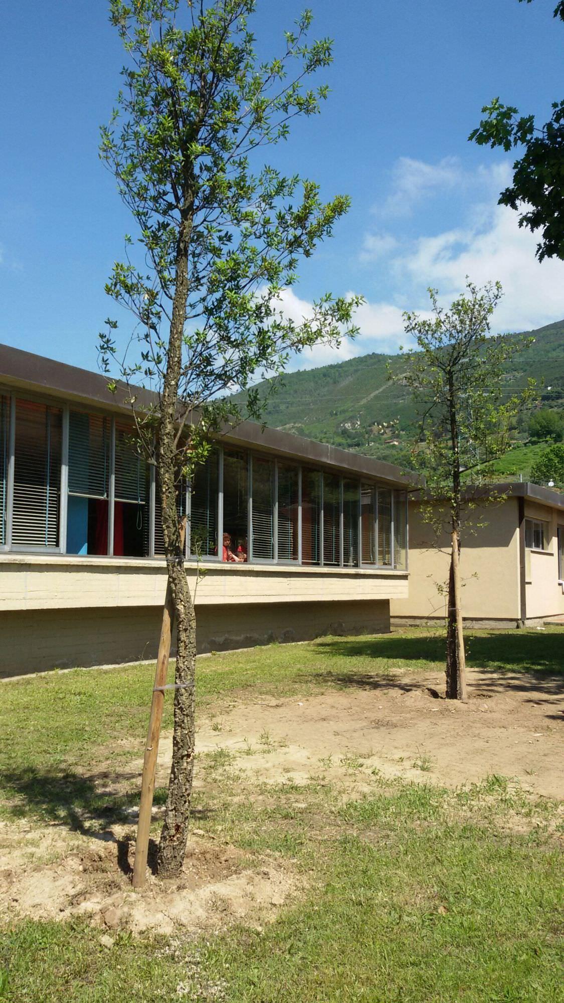 Due sughere per la scuola d'infanzia Salgari di Strettoia