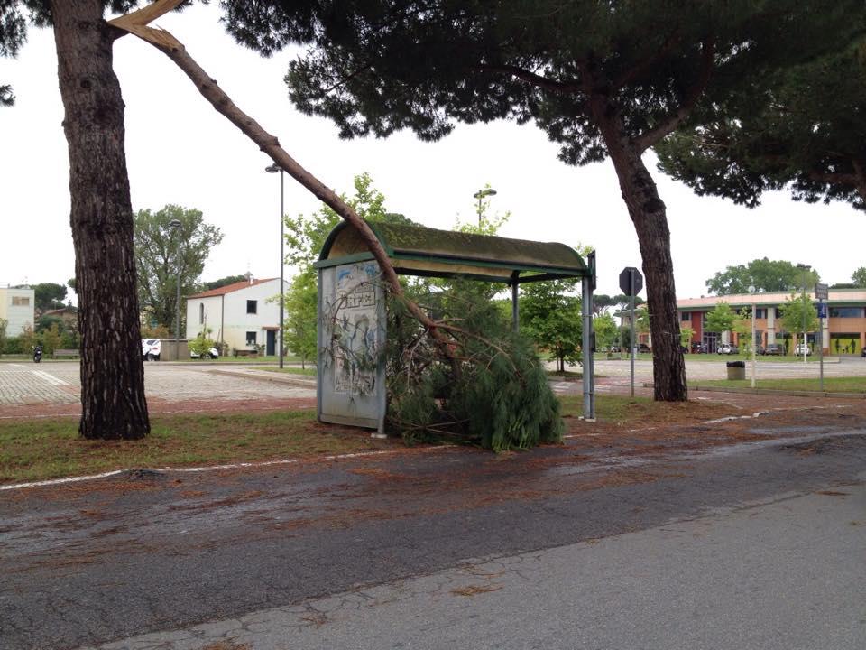 Notte di maltempo in Versilia. Cadono alberi a Lido e Marina di Pietrasanta