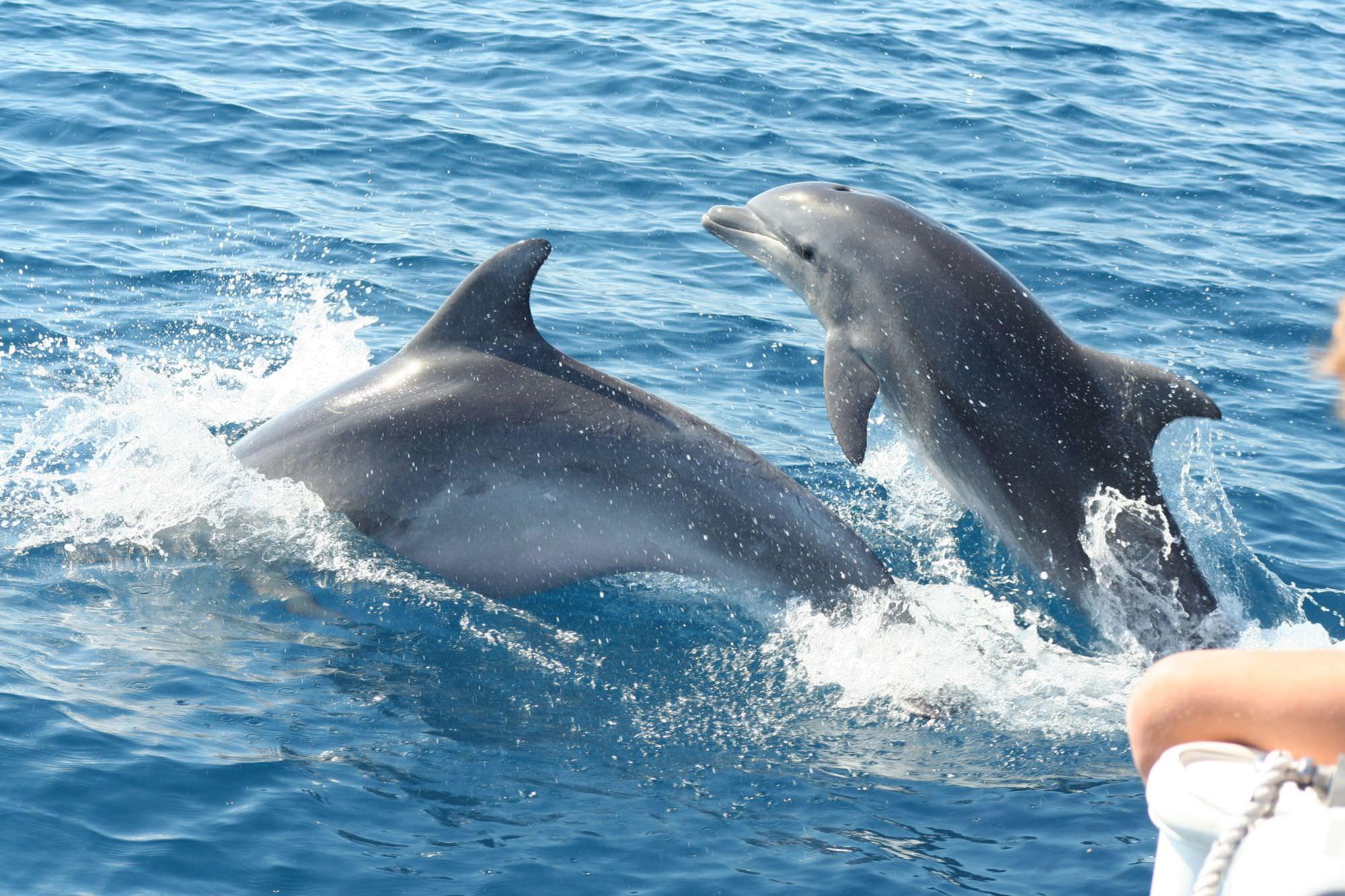 Escursioni in mare aperto alla scoperta dei delfini