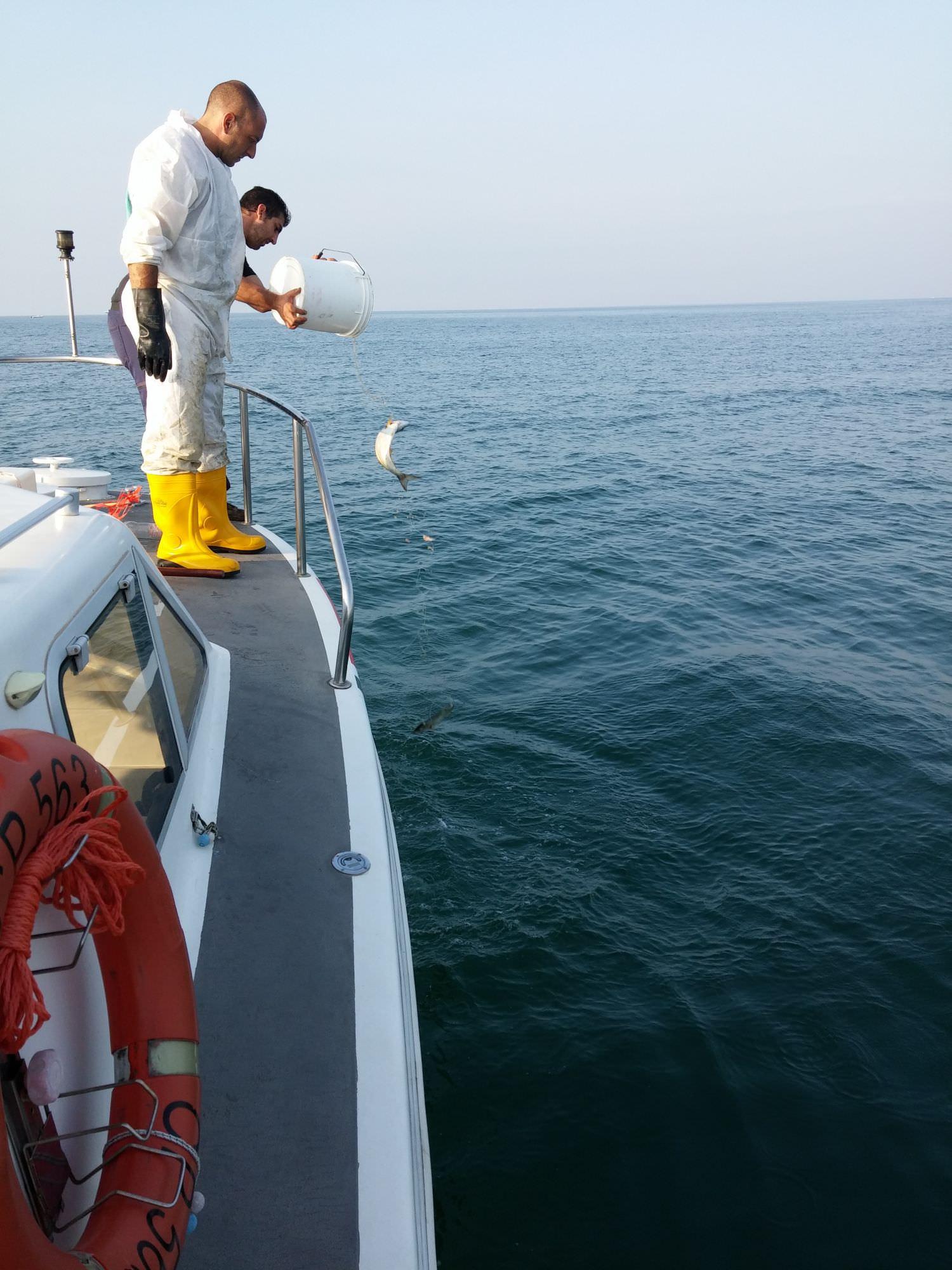Barca in difficoltà tra l'Isola d'Elba e la Corsica. Interviene la Guardia Costiera