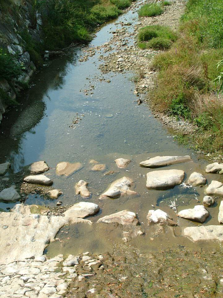 Moria di pesci sul fiume lucese cronaca camaiore for Pesci di fiume