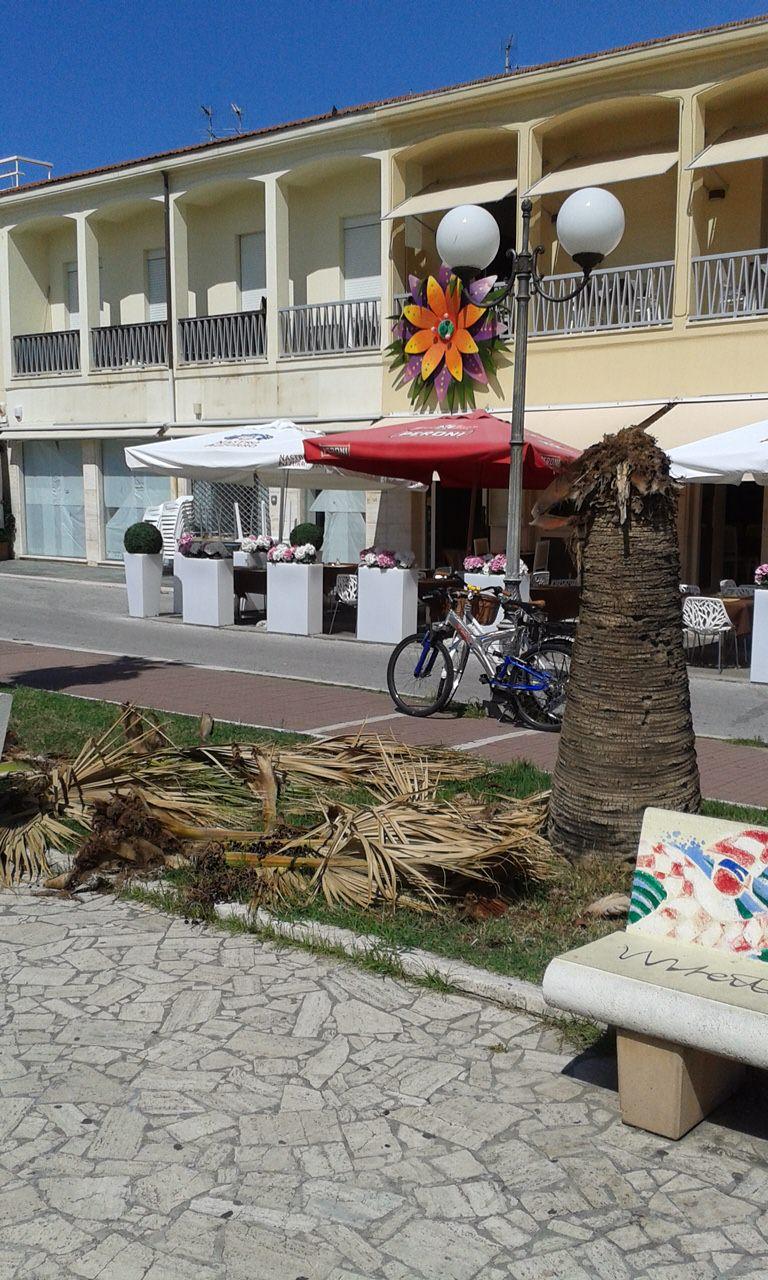 Avanzi di palma abbandonati da giorni in piazza Campioni