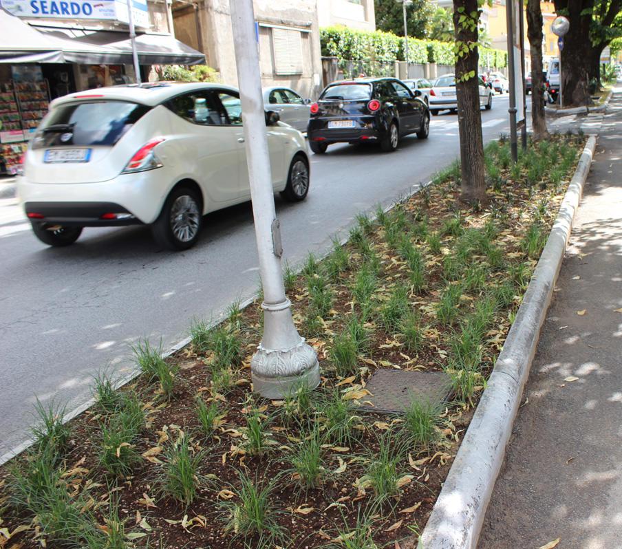 Pietrasanta sperimenta l 39 erba che non si taglia comune for Erba per prato che non si taglia