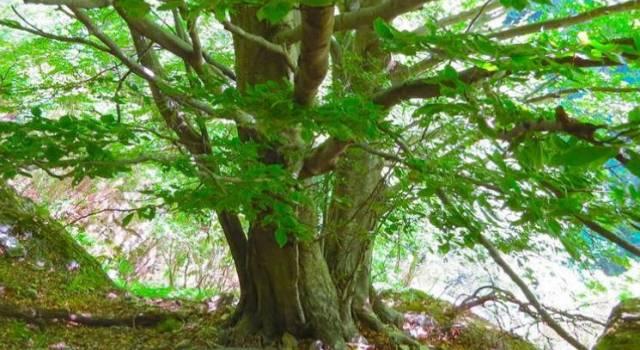 Protesta ambientalista, sale su albero per impedirne il taglio