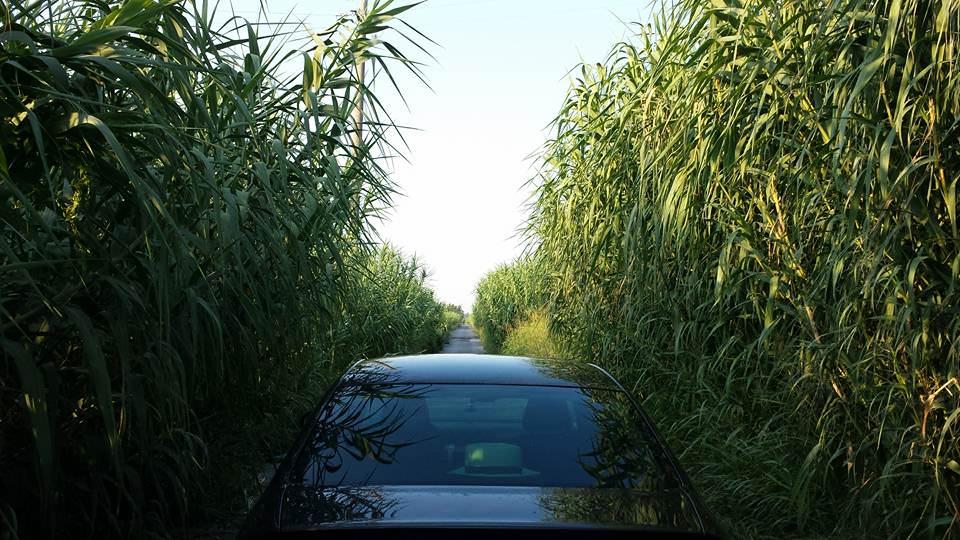 Via delle Bocchette come la giungla. Disagi a Camaiore